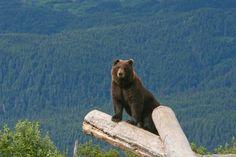 Better view, Alaska