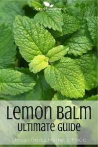 Uses for body, home, and for food. - by Scratch Mommy Lemon Balm Ultimate Guide! Uses for body, home, and for food. - by Scratch Mommy Healing Herbs, Medicinal Plants, Herbal Remedies, Natural Remedies, Lemon Balm Uses, Lemon Balm Recipes, Container Gardening, Gardening Tips, Organic Gardening