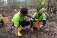 Tribratanews.com – Kepolisian Resor Balikpapan, bersama siswa sekolah SMU Negeri 7 Balikpapan, melaksanakan kegiatan bhakti sosial, Senin (02-11-2015).  Dalam bhakti sosial itu, dilakukan penanaman 3.000 bibit mangrove di daerah Sepaku Laut Balikpapan Timur, Balikpapan, Kalimantan Timur.  Penanaman mangrove yang dilakukan diharap berguna untuk mencegah terjadinya abrasi pantai. Pelaksanaan berjalan lancar dan aman.
