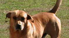 DOG MISSING - CROSSVILLE, AL: male dog wearing blue collar missing since Feb 15. Contact 256-528-7573