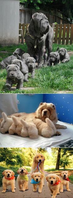 Puppies and moms.
