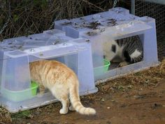 Feral Cat House, Feral Cat Shelter, Feral Cats, Animal Shelter, Cat Shelters, Rain Shelter, Animal Rescue, Niche Chat, Cat Feeding Station