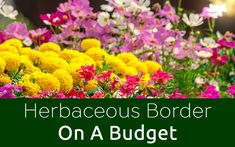 Herbaceous-border-budget-feature