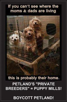 Boycott Petland, Pet Supermarket and any store that sells puppies. #savealife #rescue #adoptashelterpet