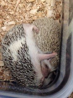 Hedgehugs ️ deeply frustrated does not imply lack of emotion