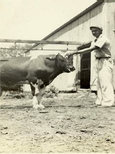 Dad taking his best cow to the fair