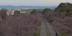 ❝ El magnífico espectáculo de ver florecer los cerezos de Japón en un timelapse grabado con drones ❞ ↪ Vía: Entretenimiento y Noticias de Tecnología en proZesa