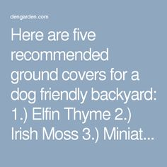 Here are five recommended ground covers for a dog friendly backyard: 1.) Elfin Thyme 2.) Irish Moss 3.) Miniature Stonecrop 4.) Labrador Violet 5.) Snow in Summer Ground covers make great accents to flower beds, between stepping stones, or in rock gardens. They fill in quickly and choke out weeds naturally. Lush ground covers make the ground softer so better for your dog to nap on, or for you to walk on in bare feet…