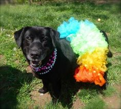 7 / 30    ***SENIOR*** Petango.com – Meet Beauty, a 9 years 5 months Retriever, Labrador / Mix available for adoption in ANDERSON, IN Address  613 Dewey Street, ANDERSON, IN, 46016  Phone  (765) 356-0900  Website  http://www.petango.com/shelter s/1058  Email  kwilson1236@gmail.com.com