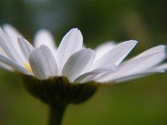 http://fc05.deviantart.net/fs71/i/2010/155/8/4/Feelin_Happy_by_TimberClipse.jpg