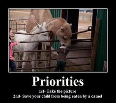 Priorities             This must be the same camel that tried to eat Emily.