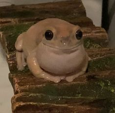 Cute Little Animals, Baby Animals, Whites Tree Frog, Frog House, Pet Frogs, Frog Pictures, Cute Reptiles, Frog Art, Frog And Toad