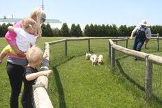 Take mom to Harbes Farm reopening celebration: Our Weekend Pick...