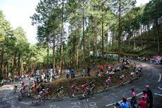 キャノンデールとチームスカイ、国内チームのJCメンバー発表 全ての出場選手が出揃う   cyclowired
