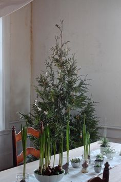 Source: DIY: Plant Your Christmas Tree in the Garden