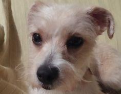 Zira Marigo #perro #veterinario www.veterinario.es