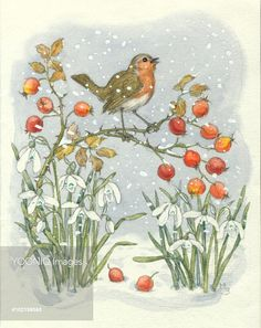 A cheerful robin stands on a twig covered in hips next to snowdrops.