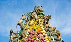 Таиланд, Лопбури,  Обезьяний банкет, длиннохвостые макаки, таиланд фото, обезьяны в Таиланде, отдых в таиланде, фрукты таиланда, Monkey Buffet Festival, праздники Таиланда, страна таиланд, Фестиваль угощения обезьян, таиланд шоу, поездка в таиланд, Лоп-Бури