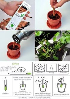 Sprout: in vendita la matita che si pianta (Sprout - a pencil that grows) Idee Diy, Cool Inventions, Green Life, Zero Waste, Reduce Waste, Sustainable Living, Garden Projects, Garden Ideas, Diy Gifts
