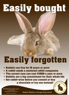 /r/rabbits is an open community where users can learn, share cute pictures, or ask questions about rabbits. Please note we are a *pet rabbit*. Bunny Rescue, Adopt A Bunny, Rescue Rabbit, Meat Rabbits, Raising Rabbits, Outdoor Rabbit Hutch, House Rabbit Society, Bunny Cages, Funny Rabbit