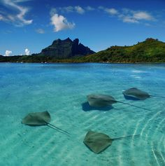 Photo is of Bora Bora in the French Polynesia - Pinning because of the sting rays, swam with them and touched them while staying on Moorea