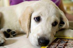 IO E MARLEY | Un cane non se ne fa niente di macchine costose, case grandi o vestiti firmati. Un bastone marcio per lui è sufficiente. A un cane non importa se sei ricco o povero, brillante o imbranato, intelligente o stupido. Se gli dai il tuo cuore lui ti darà il suo. Di quante persone si può dire lo stesso? Quante persone possono farti sentire unico, puro, speciale? Quante persone possono farti sentire straordinario? (John Grogan)