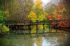 Un petit pont de bois se reflète sur l'étang de la Planchette - Forêt de Ferrières, Seine et Marne http://www.photo-paysage.com/displayimage.php?album=247&pid=5700#top_display_media