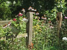rustic landscaping with split rail and flowers   Split Cedar Fence with Coneflowers
