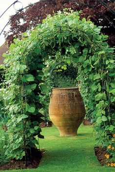 """Runner beans on trellis in Sussex, England - """"Tackling the recurring dilemma that occurs when you grow vegetables in a typical garden situation—the annual face-off between the practical and the ornamental."""""""