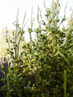 The Planthunter – Plant /Life: Brian & Trish Perkins Back Gardens, Small Gardens, Vege Garden Design, Garden Ideas, Melbourne Garden, African Plants, Bush Garden, Australian Native Garden, Painting The Roses Red