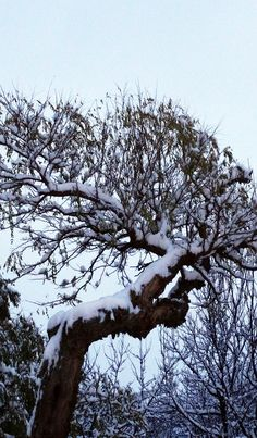 Majestic snow-covered tree in a Pasture     |    Check Out The Most Majestically Trees In The World!
