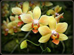 Favorite flowers :)