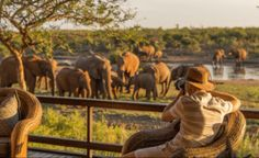 Experience the best African Safari with the country's flagship game reserves. Book the best value lodges with Kruger National Park today!