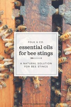 Essential oils for bee stings  | Folk + Co.Yes, there are essential oils for bee stings–there is basically an essential oil for anything and everything, and I love it. If you didn't see already on Instagram, my parents had a bee situation over the weekend. Basically, my mom noticed bees flying into the eaves of their house and none of us really want…