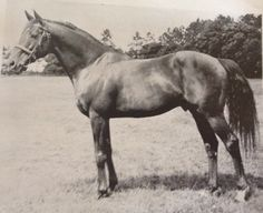 Preciptic: British sire of steeplechasers as well as flat racers. Retired to the Irish National stud at age 7. Damsire to New Providence. Died July 1964 age 22.