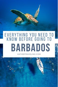 If you are planning your first trip to Barbados, here is everything you should know before booking your flights. Spoiler alert- it is worth it! #barbados #visitbarbados #Caribbean #vacation #remotework Caribbean Vacations, Beach Vacations, Beach Travel, Trip To Barbados, Places To Travel, Travel Destinations, Travel Inspiration, Travel Ideas, Travel Tips