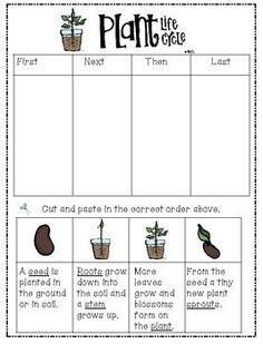 "Observe and describe major stages in the life cycles of plants and animals, including beans and butterflies. Life Cycle of a Plant ""Freebie"" differentiated lesson for grade 3 students on an iep Primary Science, Preschool Science, Elementary Science, Science Classroom, Teaching Science, Science Education, Science Activities, Sequencing Activities, Teaching Ideas"