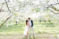 My beautiful engagement shoot in an apple orchard within the cherry blossoms...just perfect