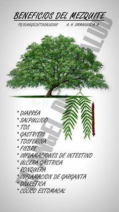Los Sorprendentes Beneficios de Mezquite Para La Salud