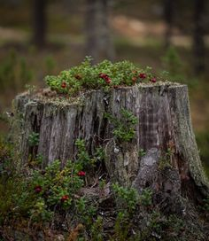 Forestphoto credit: satokangas.fi