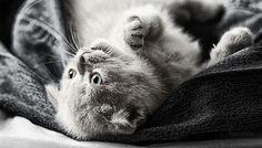 Breathtaking Kitties
