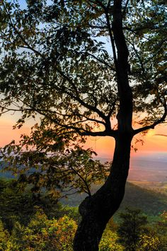 ✯ Chilhowee Recreation Area in the heart of the Cherokee National Forest