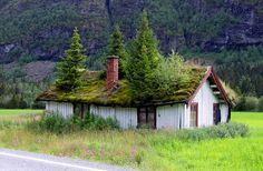 House in Norway with trees growing on roof...wow!