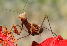 10 Macro Photography Shots Straight Out of a Bug's Life – PictureCorrect