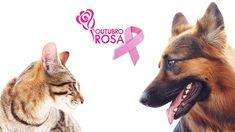 Pauta - Portal Melhores Amigos :: Outubro 2016 I OUTUBRO ROSA: SAIBA TUDO SOBRE O CÂNCER DE MAMA NOS PETS