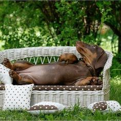 Love Dachshunds (@ldachshunds) • Instagram photos and videos