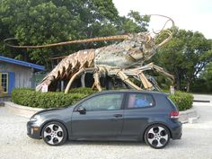 Giant Lobster in Key West - All about our Road Trip from Florida to Alaska!! http://www.theconstantrambler.com/road-trip-from-florida-to-alaska/