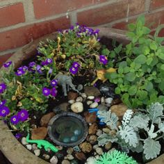 Watering hole inspired fairy garden---made it today ! Went to lowes and got plants from their clearance area (aka nearly dead plants). I used stuff I found around the house .