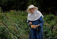 """BETHLEHEM, CT- 11 OCTOBER 2005-Sister Angele picks tomatoes in one of the Abbey's vegetable gardens. The Abbey of Regina Laudis follow St. Benedict's """"rule"""" and was the first female Benedictine abbey in the United States.   (Photo by Robert Falcetti)"""