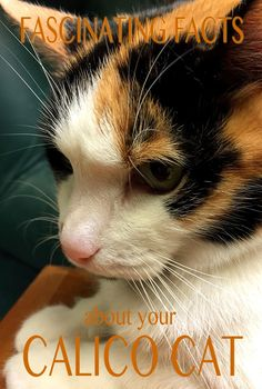 Fascinating facts about calico and tortoiseshell cats and why they are almost (but not quite) always female